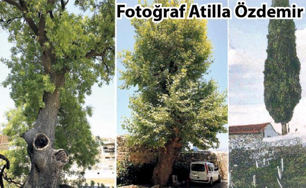 İzmir'in ağaçları