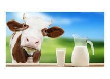Light Süt Mü, Tam Yağlı Süt mü?