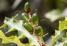 Bu bitkilerde kanser karşıtı etken maddeler bulundu