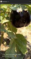 Gizem Karaca'nın ilk yetiştirdiği şey patlıcan oldu