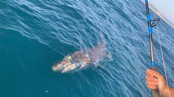 Çanakkaleli amatör balıkçı oltayı çekince şoke oldu! Tam 4 metre...