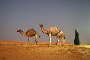 Moritanya'da çöl turizmi