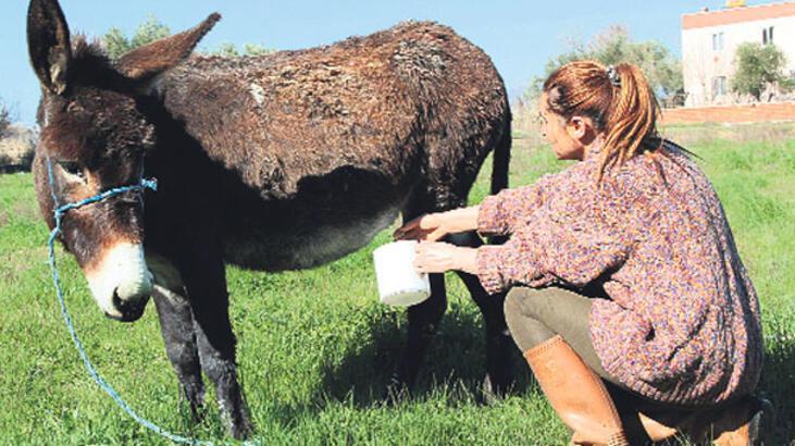 Eşek sütünü sanal ortamda pazarlıyor