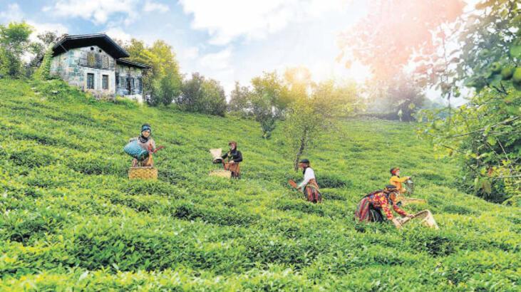 'Toprak yoksa çay yok'
