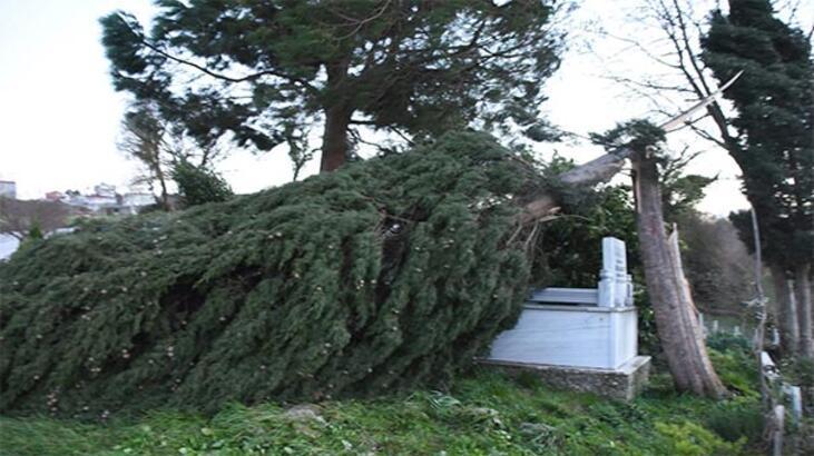Son dakika: O ilimizde çok şiddetli fırtına! Ağaçlar devrildi, çatılar uçtu...