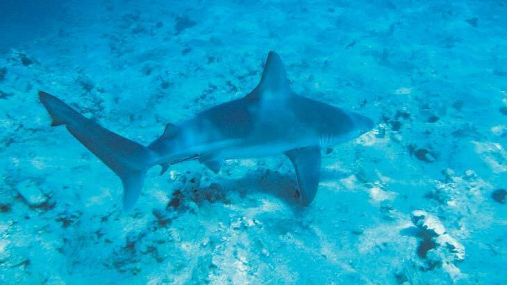 Köpek balığı katliamı