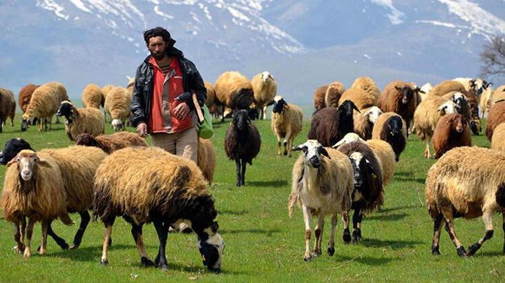 DAP desteğiyle zorlu meralarda hayvancılık kolaylaşıyor