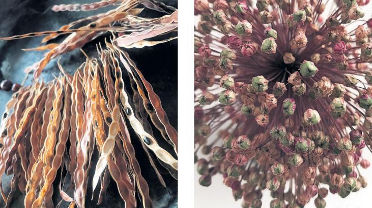 Tohum sergisi Bodrum'da
