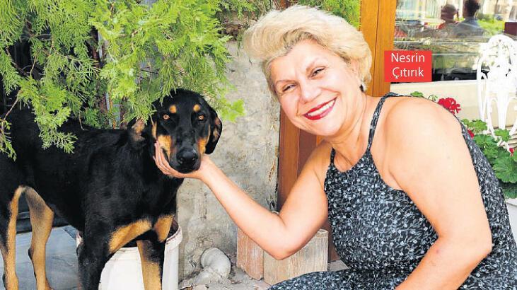 HayKonfed: Hayvanlara asıl vahşeti belediyeler yapıyor