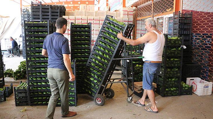 Antalya'dan Polonya'ya avokado ihracatı