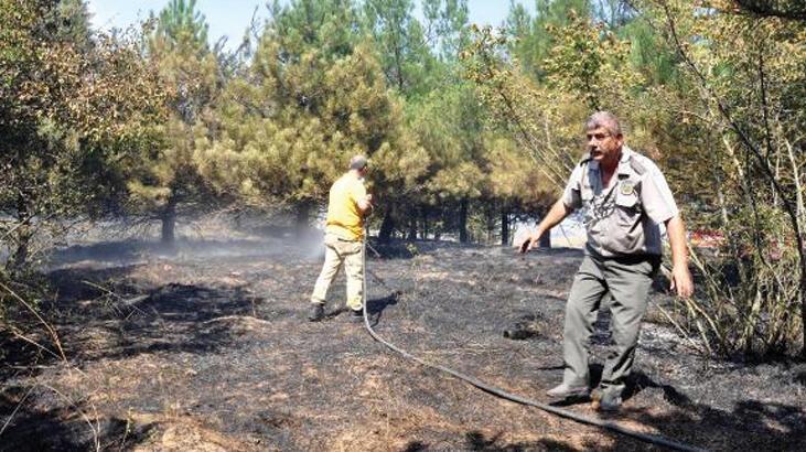 Kuşların çarpmasıyla kopan elektrik teli, orman yangını çıkardı