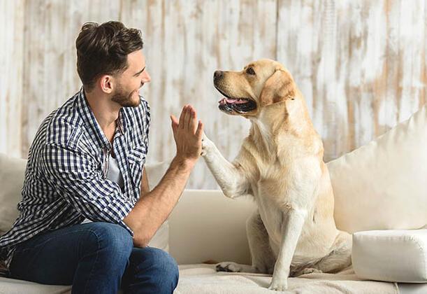 Gerçekten bir kedi veya köpek sahibi olmak istiyor musunuz?