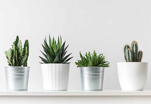Yeşil yapraklı bitkiler