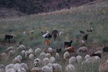 İlçede başkan, merada çoban!