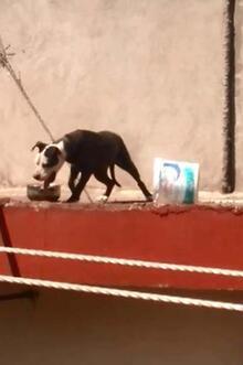 Sıcaktan ölen köpeğin sahibine rekor ceza