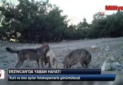 Erzincan'da yaban hayatı Fotokapanla görüntülendi