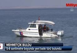 Van Gölünde yaşayan ikinci balık türünü Mehmetçik buldu