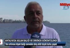 Antalyada aslan balığı ve orkinos görüntülendi