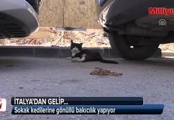 Sokak kedilerine gönüllü bakıcılık yapıyor