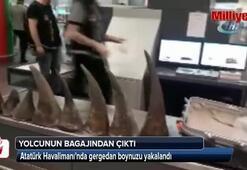 Atatürk Havalimanında gergedan boynuzu yakalandı