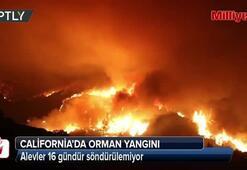 Californiada orman yangını