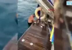 Ayaklarına olta dolanan martıyı kaptan kurtardı