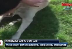 Sanayi sitesi içerisinde önüne çıkan iki köpeği katletti