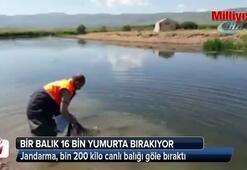 Jandarma, bin 200 kilo canlı balığı göle bıraktı