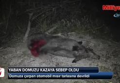 Konyada yaban domuzu kazaya sebep oldu: 5 yaralı