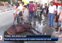 Sıcak havada koşmaktan yorulan at cadde ortasında yere yığılarak öldü