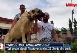 Anadolu aslanına büyük ilgi