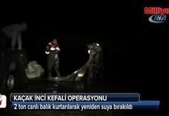 Kaçak inci kefali operasyonu