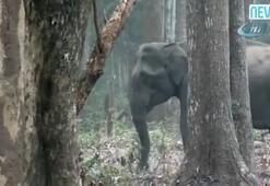 Duman çeken fil böyle görüntülendi