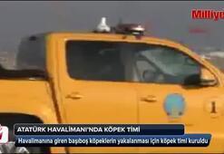 Atatürk Havalimanı'nda köpek timi kuruldu