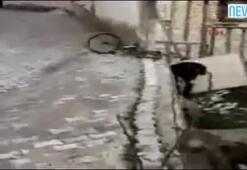 Gösteri yapmak isterken duvara çarptı