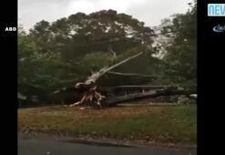 Dev ağaç evin üzerine devrildi