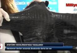 Atatürk Havalimanı'da yılan ve timsah derisi yakalandı