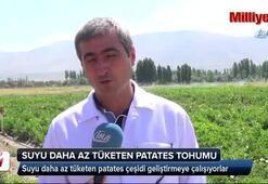 Suyu daha az tüketen patates tohumu üretiliyor