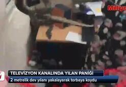 Televizyon kanalı ofisine yılan girdi