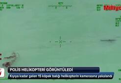 Helikopterden köpek balıklarını gördüler