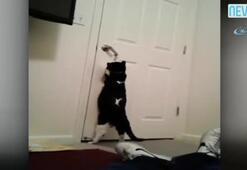 Kendi kapısını kendi açıyor
