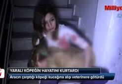 Aracın çarptığı köpeği kucağına alıp veterinere götürdü