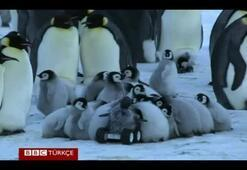 Uzaktan kumandalı sahte penguen bilimin hizmetinde