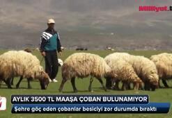 Aylık 3500 TL maaşa çoban bulunamıyor