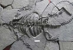 228 milyon yıllık kabuksuz kaplumbağa fosili bulundu