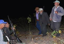 Son dakika haberi: Köyün ihtiyar delikanlıları domuz nöbetinde