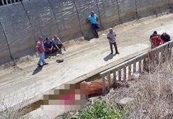 Tuttuğu ip sonu oluyordu Danasıyla birlikte 10 metreden aşağıya düştü