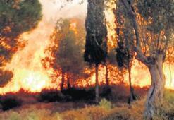 Cunda Adası'nda 'ihmal' yangını