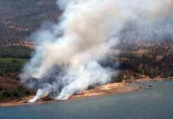 Son dakika: Cunda Adasında orman yangını