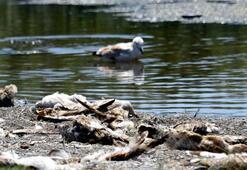 Van Gölünde korkutan görüntü Hepsi açlıktan...